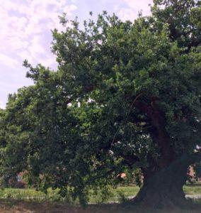 Dit livsformål og et gammelt egetræ