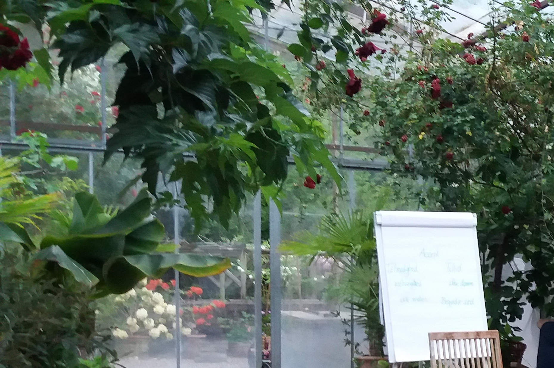 Mindfulness i Orangeriet 1